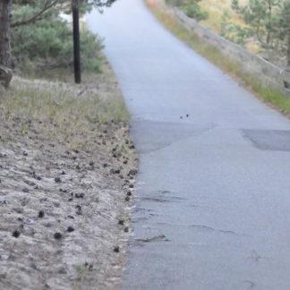 En bit av asfaltsvägen på väg mot stranden. Delar av asfalten är skadad och lappad. I bakgrunden skymtar människor som går på vägen.